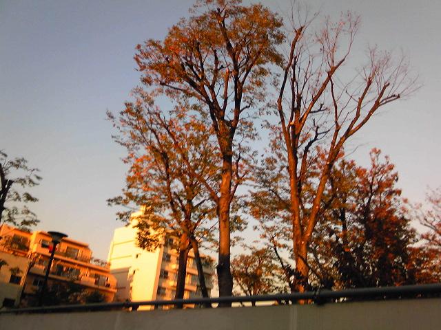 秋を感じながらウォーキング